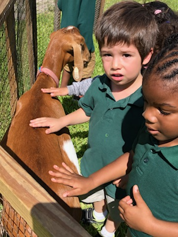 Little Farm visits Headstart Students